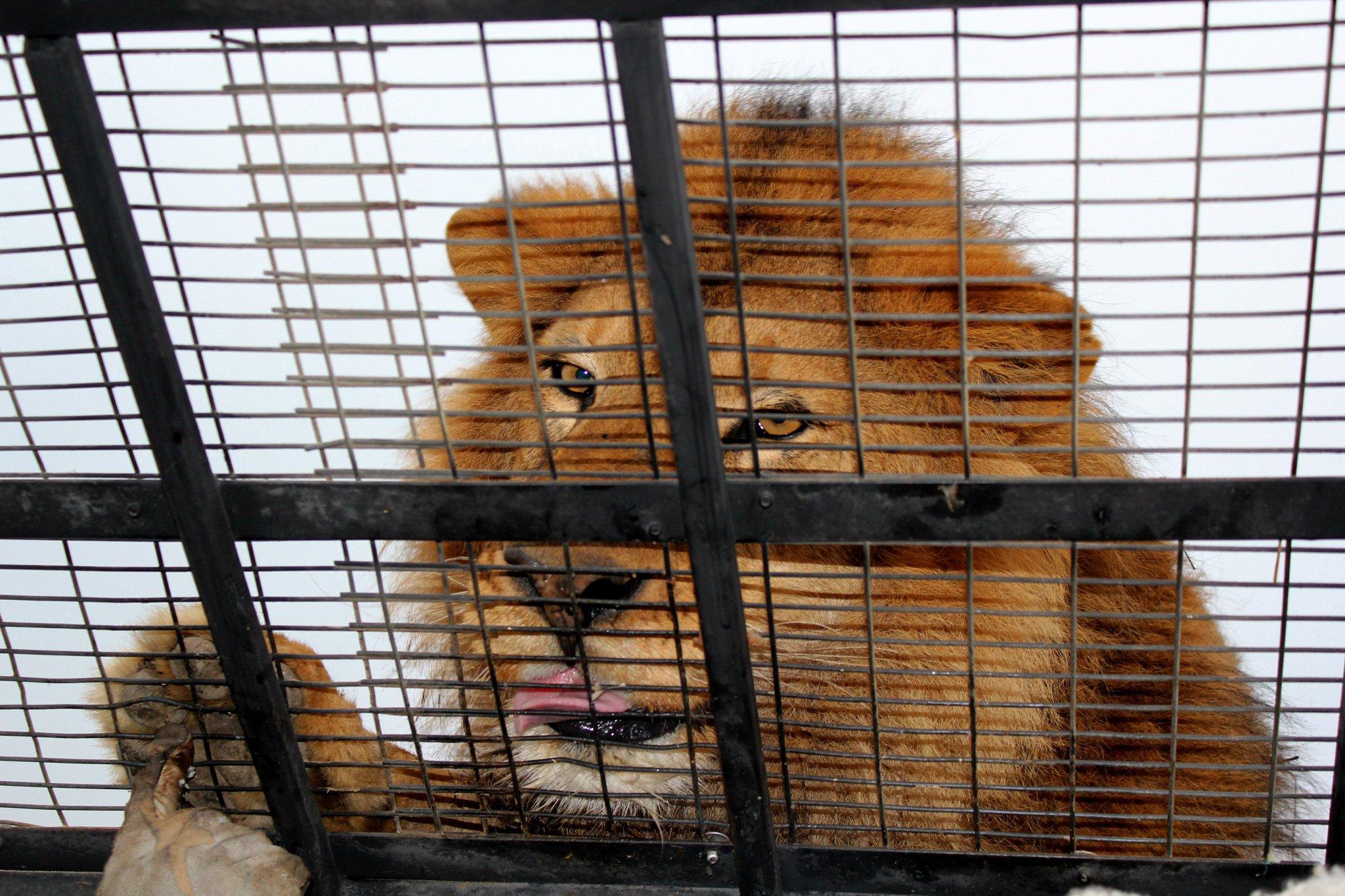 Rancagua chile safari download - photo#42